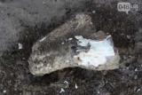 В Одесской области нашли останки мамонта