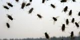 Врачи объяснили, чем опасны обычные мухи