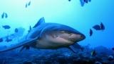 В США мужчина погиб при нападении акулы