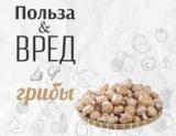 Польза и вред грибов: насколько опасен белок в своем составе хитин